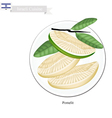 Fresh Ripe Pomelit A Famous Fruit in Israel vector image vector image