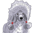 poodle a vector image vector image
