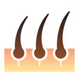 hair follicle flat icon skin hair color icons in vector image