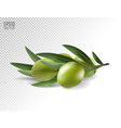 green olive branch isolated on transparent vector image