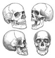 sketch skull hand drawn anatomical skulls vector image