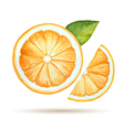 Watercolor orange isolated on white background vector image vector image