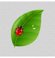ladybug with leaf isolated in trasparent vector image