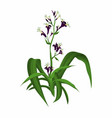 flaxplant vector image