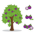 mangosteen on tree with white background vector image vector image