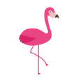 pink flamingo bird exotic image vector image vector image