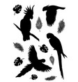 set parrot silhouette with palm leaves vector image vector image