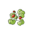 strawberry plant with green leaves ripe berries vector image vector image