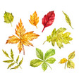 maple rowan oak birch leaves isolated on white vector image vector image