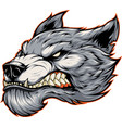 head of a fierce werewolf wolf vector image vector image