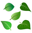 set of various green leaves isolated on white vector image