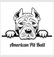 american pit bull - peeking dogs - breed face head vector image