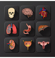 Internal Organs Medical And Health Icon Set vector image
