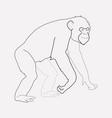 chimpanzee icon line element vector image