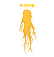 ginseng panax root in cartoon style vector image vector image