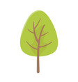 greenery tree foliage botanical nature icon vector image