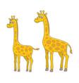 set giraffes vector image vector image