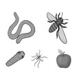 arthropods insect mosquito beeearth worm vector image