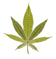 Cannabis2 vector image