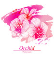 floral design with orchid flowers vector image