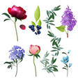 flowers collection decorative botanical floral vector image vector image