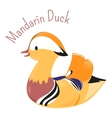 Mandarin duck isolated on white vector image