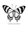 set hand drawn black and white alcides vector image vector image