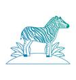 wild zebra in jungle vector image
