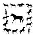 set wild horse silhouette vector image