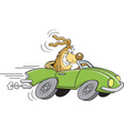 Cartoon dog driving a car vector image vector image