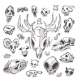 Diverse Skulls and Bones Set vector image