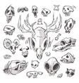 diverse skulls and bones set vector image
