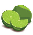 fresh limes and lime slices on white background vector image