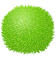 Green fluffy ball on white vector image vector image