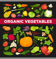 organic vegetables fresh veggies salads spice vector image vector image