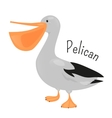 Cartoon pelican isolated on white vector image vector image