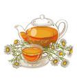chamomile tea vector image vector image