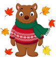 cute brown bear in a sweater and scarf with autumn vector image vector image