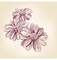 daisy hand drawn llustration realistic vector image