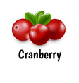 granberry with transparent background vector image vector image