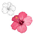hibiscus pink red blooming flower isolated macro vector image vector image