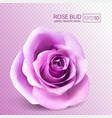 realistic pink rose on transparent vector image vector image