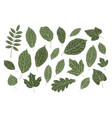 set decorative leaves nature summer concept vector image vector image