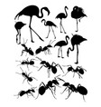 silhouette flamingo and ants vector image