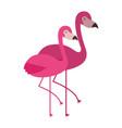 two pink flamingo bird exotic image vector image