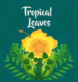 yellow flower exotic bloom branches tropical vector image vector image
