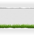 green grass and ripped paper border vector image