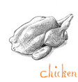 hand drawn chicken farm animal vector image