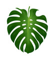 monstera leaf vector image