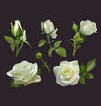 realistic roses bouquet white rose flowers vector image